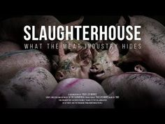 Exposé reveals rampant suffering of cows, chickens, pigs, and other animals in 58 slaughterhouses.