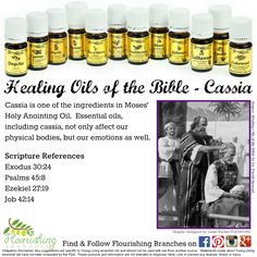 Young Living Essential Oils: 12 Oils of Ancient Scripture Healing Oils of the Bible - Cassia