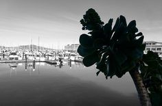 A plant near the Fisherman's wharf San Francisco city. Want this picture printed on canvas or cards etc? Click on the image :) Fisherman's Wharf San Francisco, Framed Prints, Canvas Prints, White Art, Print Pictures, Taking Pictures, Black And White Photography, Nature Photography, Plant