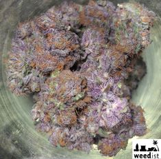 Grape Ape – One of My Favorite Strains – Info and Eye Candy | Weedist