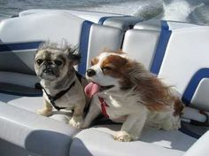 Out K9 friends love to join us on the seas. Follow this board if you like seeing your puppy pals out on the water with you! Visit Clarks Landing dot com #clarkslanding #dogsonboats #pointpleasant #puppies #boatinglife #jerseyshore #dogsonwater #bestk9friends #luxurylife #marinas #manasquanriver #newjersey #newjerseyphotography #waterphotography