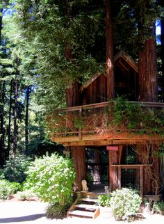 a redwood tree house ! I read about a house in a red wood tree when i was little and always wanted one, how cool would that be !!