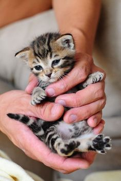 Cute kittens doing funny things will always going to cheer you up. Cute kittens doing funny things will always going to cheer you up. Kittens Cutest Baby, Puppies And Kitties, Cute Cats And Kittens, Baby Cats, Bengal Kittens, Adorable Kittens, Beautiful Cats, Animals Beautiful, Cute Cats Photos