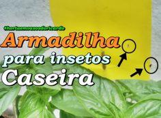 Pegue insetos que estragam sua horta. Mosca branca e mosca minadora e mosca da banana. Clique em assitir