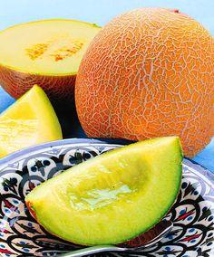 Sockermelon 'Galia F:1 hybrid' (Cucumis melo)
