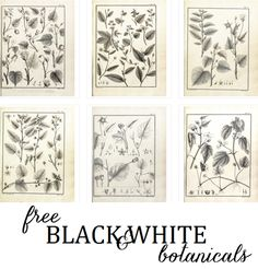 free black and whtie botanical artwork