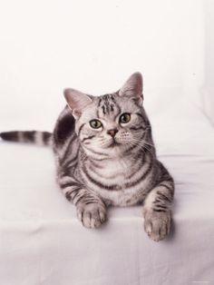 Finnegan the Cat
