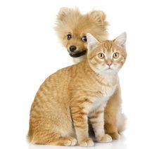 Hur du får den vuxna katten och den nya lilla valpen att bli kompisar – 5 smarta steg.