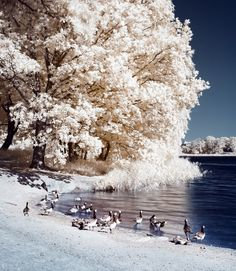 Infrared Pictures Of Outdoor Scenes by Hannes Runelof Will Amaze You (PHOTOS) | The Huffington Post