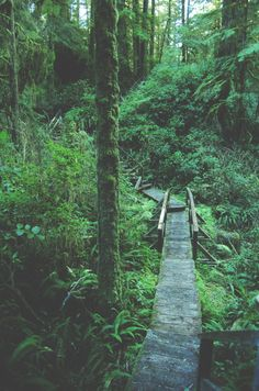 spiritbreather:tuaari:one of my favourite walks through the rainforest mmm