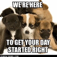 80 Good Morning Memes To Kickstart Your Day Good Morning Dog, Good Morning Animals, Good Morning Handsome, Good Morning Sunshine, Good Morning Friends, Bad Morning, Monday Morning, Funny Animal Memes, Funny Animal Pictures