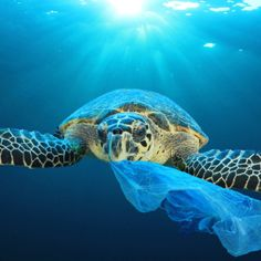 Le Septième Continent by Maxime Raynal Ocean Pollution, Plastic Pollution, Environmental Pollution, Save Our Earth, Save The Planet, Ocean Turtle, Sea Turtles, Great Pacific Garbage Patch, Amazing Animals