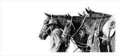 Reid Studios - Art by Vincent Reid - located in Howick Pencil Art, Art Studios, Wildlife, Horses, Gallery, Animals, Animales, Roof Rack, Animaux