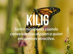 #frase #mariposas #estomago #atraccion