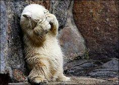 Little polar bear playing hide and seek Baby Polar Bears, Cute Polar Bear, Cute Bears, Animals And Pets, Baby Animals, Funny Animals, Cute Animals, We Bear, Bear Cubs