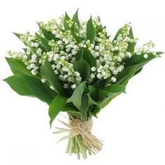 Lilly of the Valley Bouquet.the perfect wedding bouquet White Flowers, Beautiful Flowers, Flowers Nature, Wedding Bouquets, Wedding Flowers, Flower Bouquets, Rose Bouquet, Kate Middleton Wedding, 1. Mai