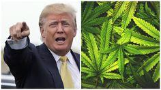 Texas?? You ok with marijuana?  http://viralsmile.net/article/donald-trump-legalize-marijuana-in-all-50-states/1001665/?utc_campaign=1001665