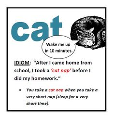 "Image result for Meaning of ""cat nap"" with images"