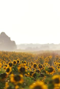 Whether planted as a crop or a roadside attraction, sunflowers are a popular summer backdrop for photoshoots and extravagant proposals alike because of their impressive stature and eye-catching golden petals. Luckily, there are sunflower fields stretching as far as the eye can see across every region in the U.S., and many of them are must-see destinations. #sunflowerfields #staycations #safetravelideas #bhg