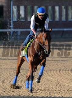 American Pharoah (April 29, 2015) American Pharoah, George Alvrez up... © 2015 Rick Samuels/The Blood-Horse