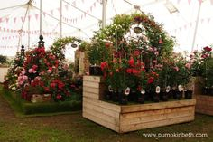 The Festival of Roses Marquee at the RHS Hampton Court Palace Flower Show is a super place to visit if you're looking to purchase roses for your garden. This is Peter Beales Roses exhibit inside The Festival of Roses Marquee, which was chosen by the RHS judges as the Best Rose Exhibit, at the RHS Hampton Court Palace Flower Show 2016.