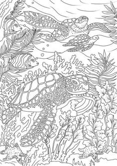 Ocean Coloring Pages for Adults Inspirational Ocean Life Turtles Printable Adult Coloring Pages From Ocean Coloring Pages, Turtle Coloring Pages, Coloring Pages For Grown Ups, Printable Adult Coloring Pages, Animal Coloring Pages, Coloring Pages To Print, Coloring Book Pages, Kids Coloring, Coloring Sheets