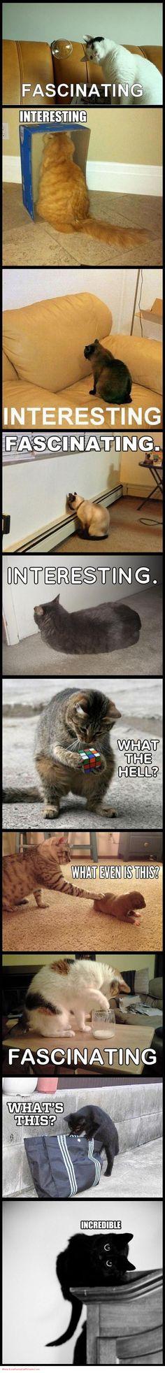 Funny Cat Captions Grumpy Cat Kitten Cute