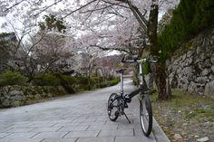Copyright © 犬のおっさん 様 / メトロ 2006年 / 滋賀県に来て数年たちますが自宅から近い昔ながらの景観が残る石垣の町坂本をポタリングするのが大好きです。天気予報では、明日から春の嵐ということで、桜の花が散る前にと、あわてて桜の花を見に行きました。そのとき撮影した写真です。