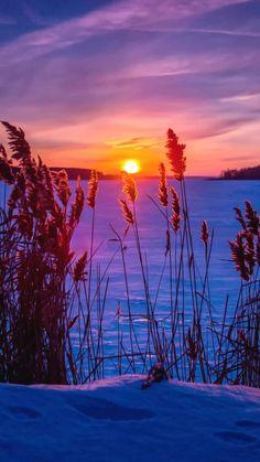 winter, sunset, snow, grass