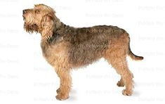 12 Sheet  Otterhound Edible CakeCupcake Party Topper ** Learn more by visiting the image link.(This is an Amazon affiliate link and I receive a commission for the sales)