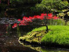 Red Maple (Bonsai style) by Anoiksis.deviantart.com on @deviantART