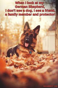 German Shepherd – The Strong and Loyal Companion  http://doggiewoof.com/german-shepherd-the-strong-and-loyal-companion/