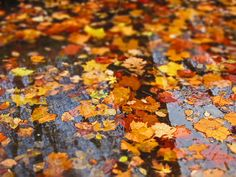Water Leaves / Image via: Csqrd25, via Flickr #fall #autumn
