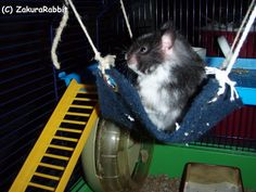 Fun project to make with Julia -- hamster hammocks.