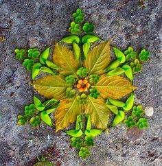 Flower-Mandalas-Floral-creations-by-Kathy-Klein-13