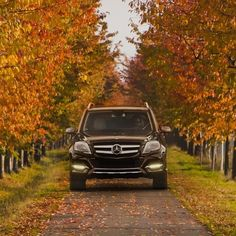 If the air is crisp and the leaves are falling in your neck of the woods, tell us where you plan to drive for the best views this autumn—or if you've found them already, snap a few photos of your Mercedes-Benz and share them with us using hashtag #MBfamily.