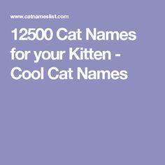 flirting memes with men names female cats name