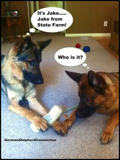 Jake from state farm Jake From State Farm, Laura Lynn, Funny Memes, Hilarious, Crazy Dog, German Shepherds, Shepherd Dog, Just For Laughs, Mans Best Friend
