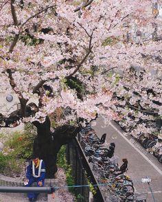 [JAPAN] CHERRY BLOSSOM (SAKURA) GUIDE – Best Spots in Tokyo   ANAKJAJAN.COM
