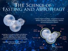 Autophagy happens when your body recycles and gets rid of old or excess cells (like fat) that don't serve a purpose or benefit your health. Anti Inflammatory Herbs, Cellular Energy, Slow Metabolism, Fatty Liver, Reduce Inflammation, How To Increase Energy, Intermittent Fasting, Immune System, Pain Relief