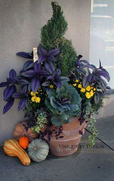 Commercial Prop l Unique by Design  - Fall Container Gardening