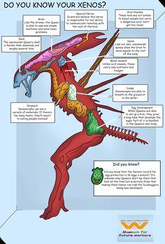 xenomorph xenomorph queen alien weylandyutani through-worlds-and-centuries.tumblr.com