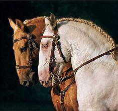 Cute Horses, Pretty Horses, Horse Love, Beautiful Horses, Paint Horse, Horse Art, Horse Photos, Horse Pictures, Animals And Pets