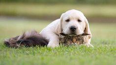 """this is my kitten"""