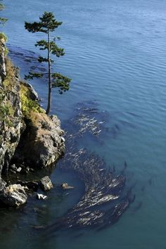Whidbey Island, WA: Shoreline at Deception Pass | OregonLive.com