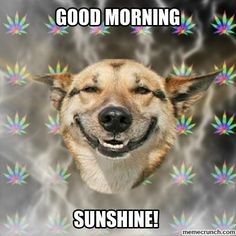 Humor - The Best Weed Jokes and Memes for Funny Friday Memes, Funny Dog Memes, Friday Humor, Funny Dogs, It's Funny, Tgif Funny, Funny Life, Funny Quotes, Dog Humor