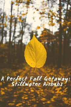 nice 25 Beautiful Autumn Photo That You Can Try Epic Quotes, Joker Quotes, Inspirational Quotes, Air Photo, Meditation, Butterfly Pictures, Yellow Leaves, Fall Photos, Photo Quotes