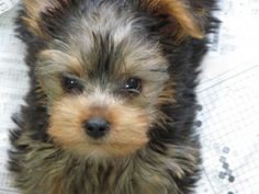 Puppy Supplies: A Checklist for First Time Dog Owners