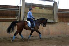 Roosa's Horsey Life: New boy!
