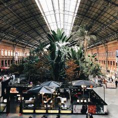 Atocha jungle 🐢🐢🐢 . . . #madrid #espana #spain #railway #renfe #atocha #estacion #stazione #station #railwaystation #urban #jungle #urbanjungle #atocha #visitmadrid #igersmadrid #vsco #vscocam #afterlight #saturday #trainstation #travel #madridista #turismomadrid #estaciondeatocha #jardintropical #jardin #garden #madridmemata #igersspain #tropical